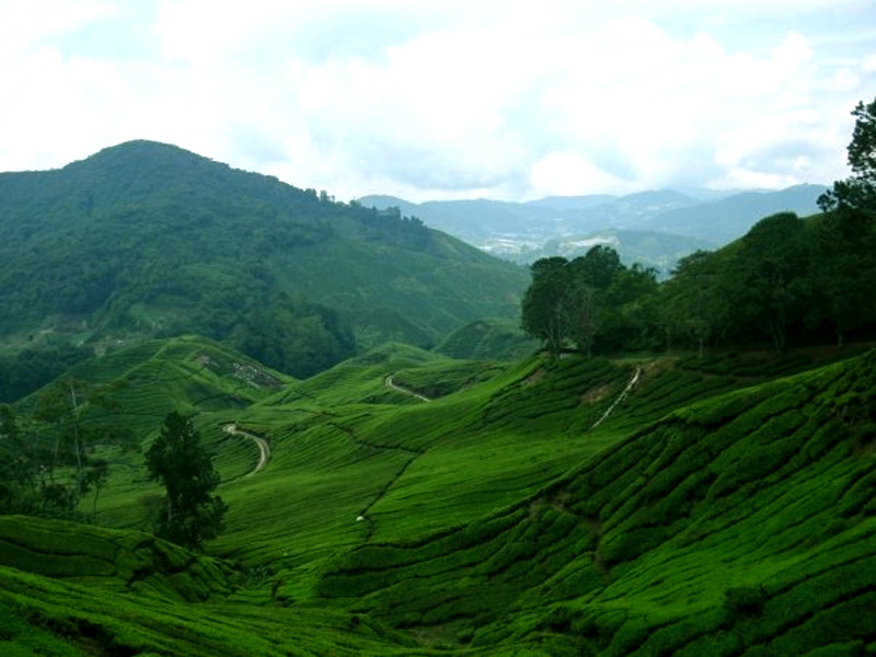 Cameron Highlands Malaysia Travel Guide Of Hotels And