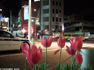 Some flowers at the street