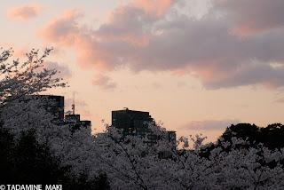 Pink and pink, at Hanzo-mon, Tokyo