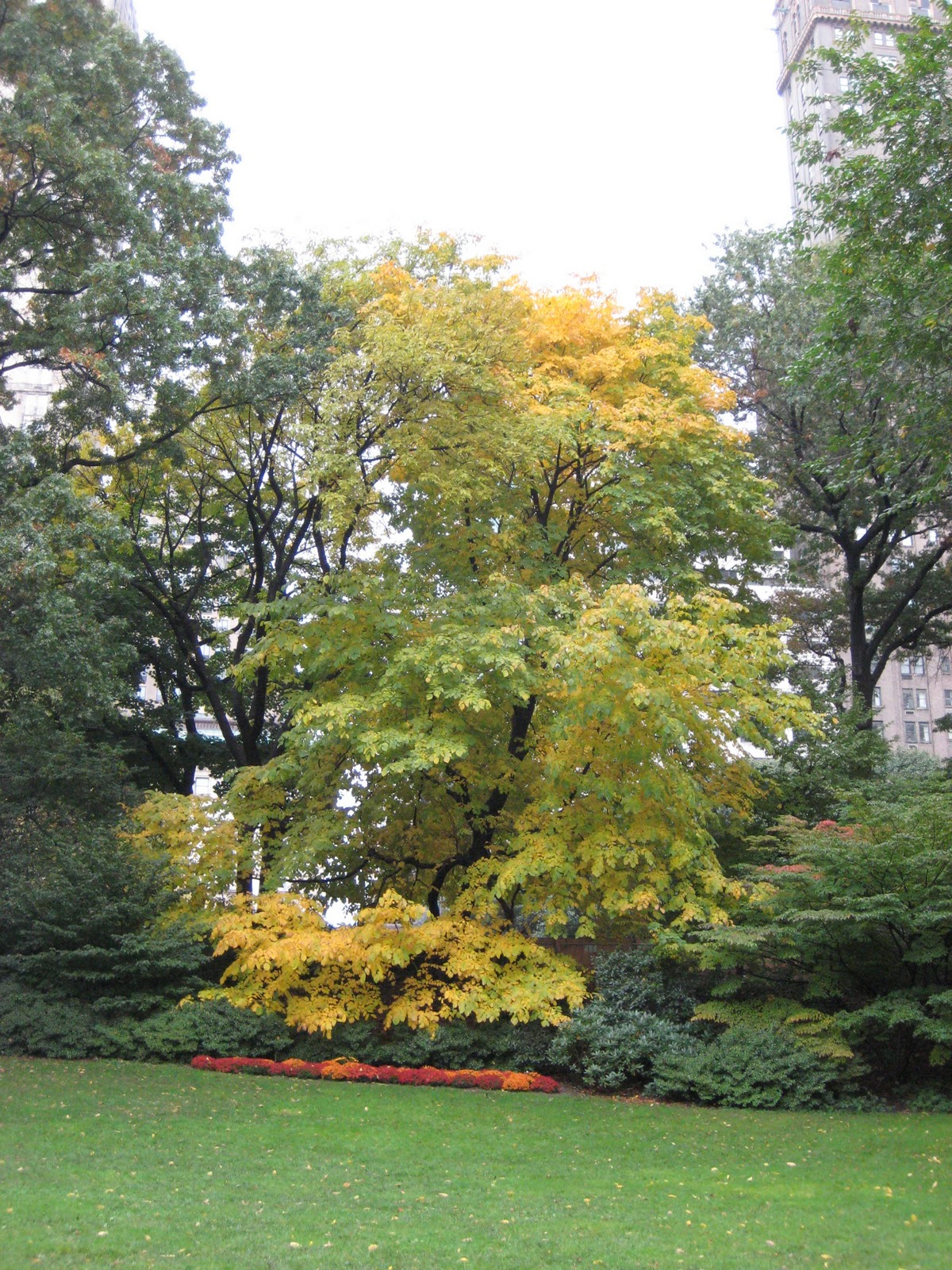 planted cloud: Top Five Native Trees For Fall Color