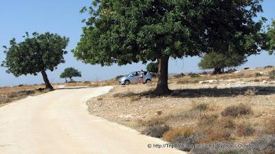 Саванна Кипра by TripBY.info