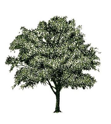 Árvore — Estudo Bíblico