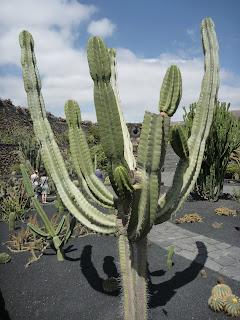Jardín de Cactus VIII