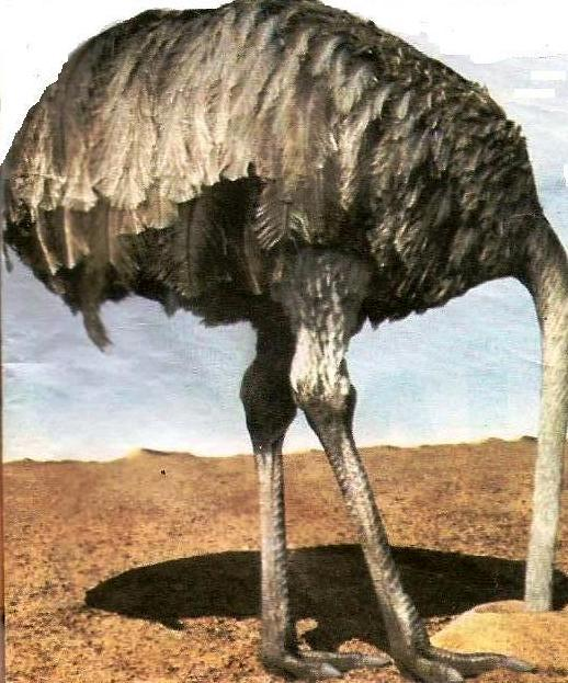 [materia+avestruzcorte.jpg]