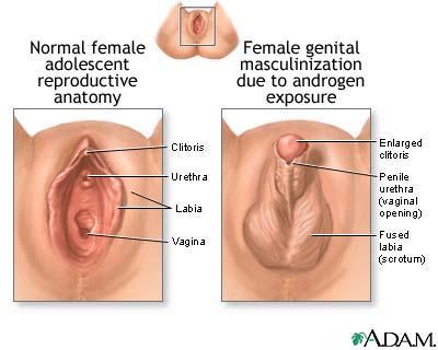 Sperma yang berbentuk seperti kecebong, terdiri atas kepala (bentuk ...