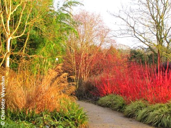 Skilful Planting Leads To Magnificent Winter Colour Palettes Here At  Hillier   180 Acres Of Some Of The Finest Plants And Trees In The Country    Just ...