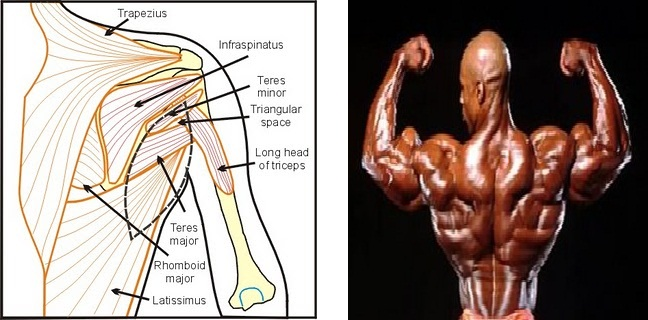 Muscle Activation: October 2010