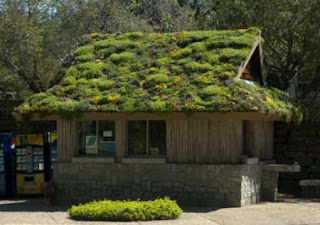 Sustainable Green Roofing