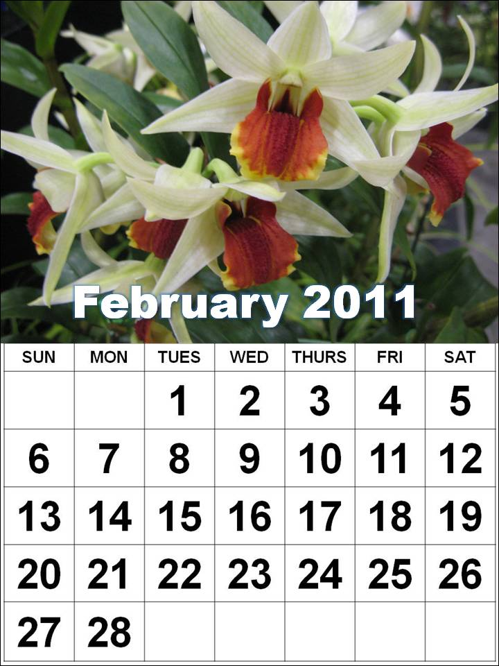 Homemade Printable Calendar 2011 February with big fonts and orchid flowers