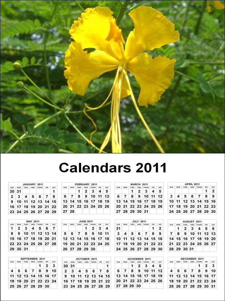 printable yearly calendar 2011. house annual calendar 2011.