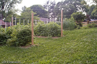 HOW TO BUILD AN ELECTRIC DEER FENCE | EHOW