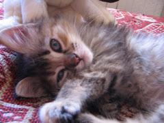 Mi hermosa gatita Molly