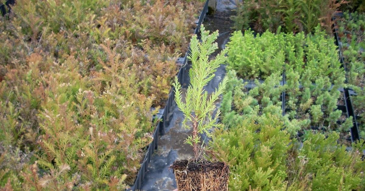 Manejo de viveros forestales - Viveros bermejo ...