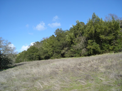 hillside in blue and green and gray