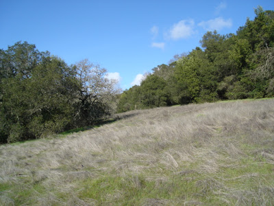 hillside in early spring