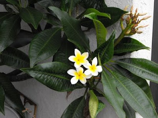 flowers in mom garden