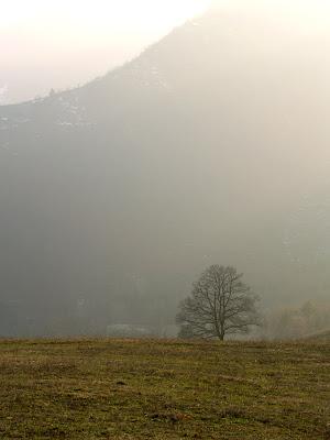 Bagno di Romagna: albero in contro luce