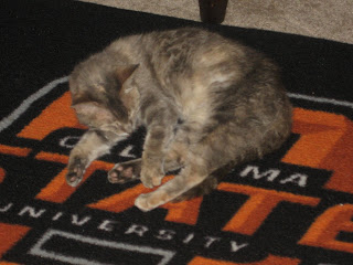 Gabby snoozing in the Pistol Pete office