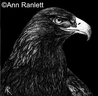Golden Eagle on black scratchboard, by Ann Ranlett