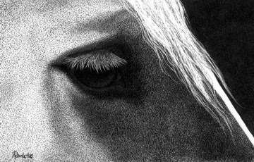 Belgian Gaze - ink on scratchboard by Ann Ranlett