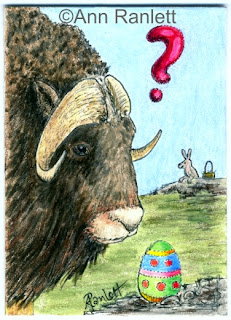 Mystified Musk Ox - color pencil ACEO by Ann Ranlett