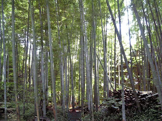 bamboo thicket in funabashi