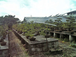 bonsai farm