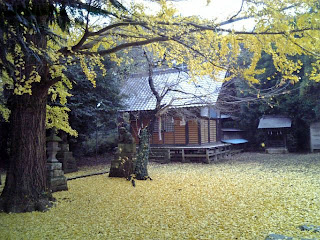 small shinto shrine with yellow ginkgo leaves