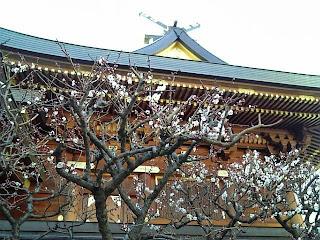 ume blossoms in yushima tenjin