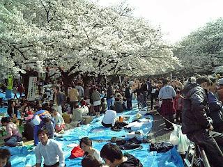 hanami in the park