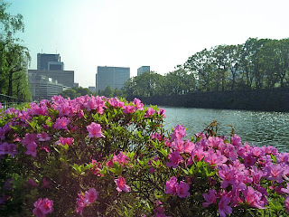 azalea by moat