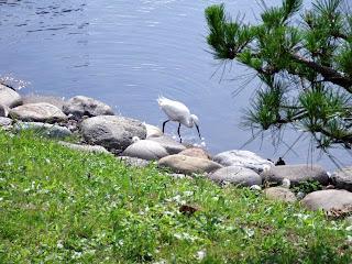 heron in hama-rikyu gardens