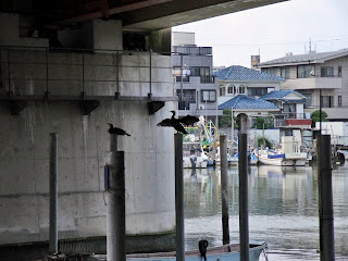 cormorants under the high way