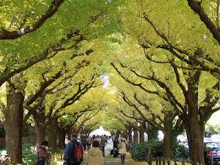 street lined with ginkgo trees in Jingu-gaien