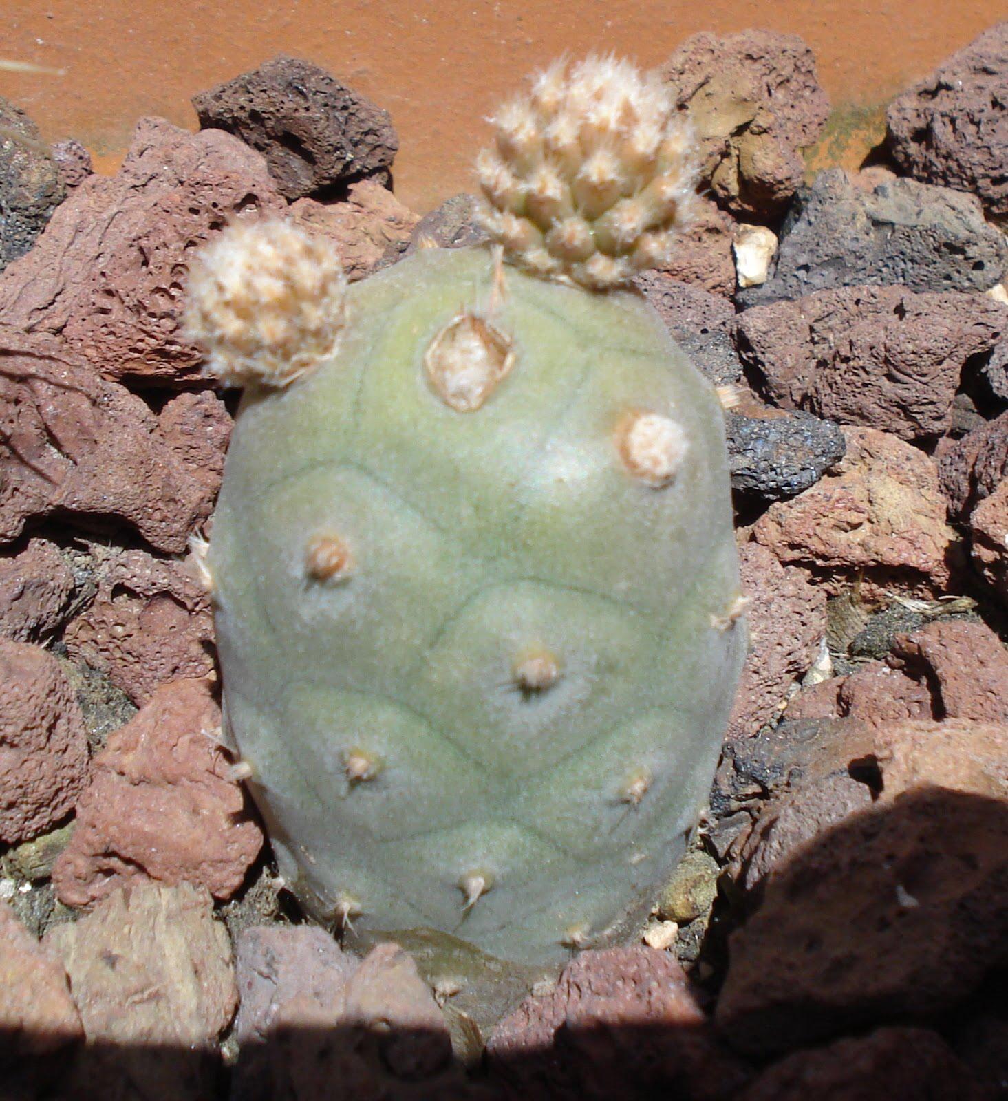 Cactus y suculentas evoluci n cactus for Nombres de cactus y suculentas