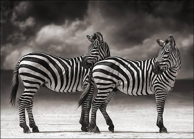 [nick+brandt+zebra]