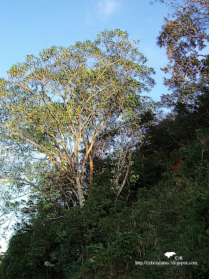 foto tomada a orillas de la carretera de Omoa a San Pedro Sula