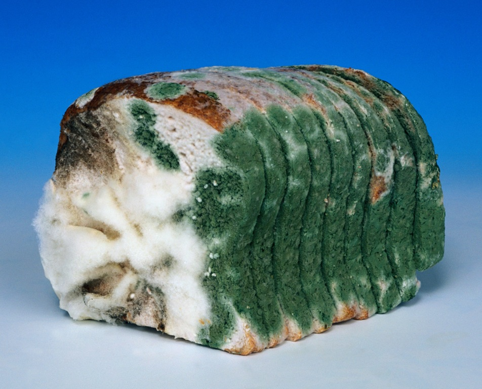 """DK King: """"Moldy Old White Bread"""" defined"""