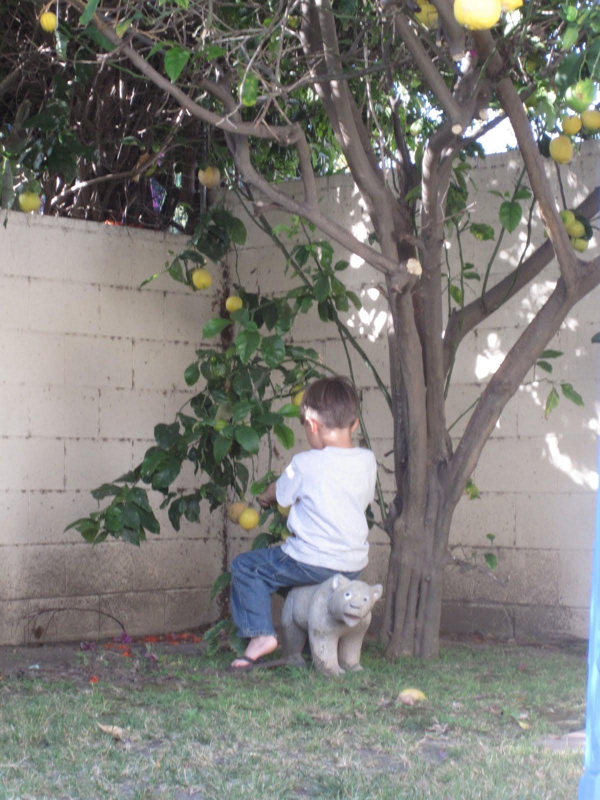 fun friday backyard field guide getting started