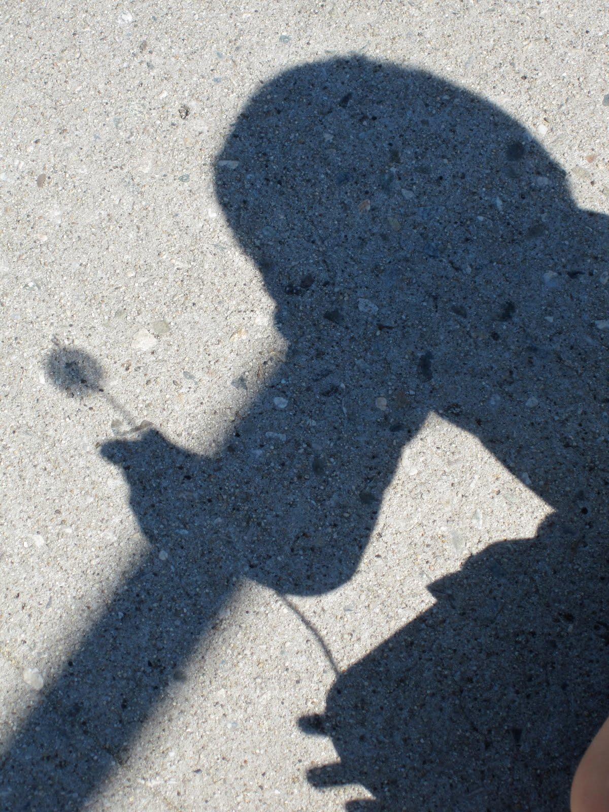 Fun Friday: Shadow Play - GoExploreNature.com