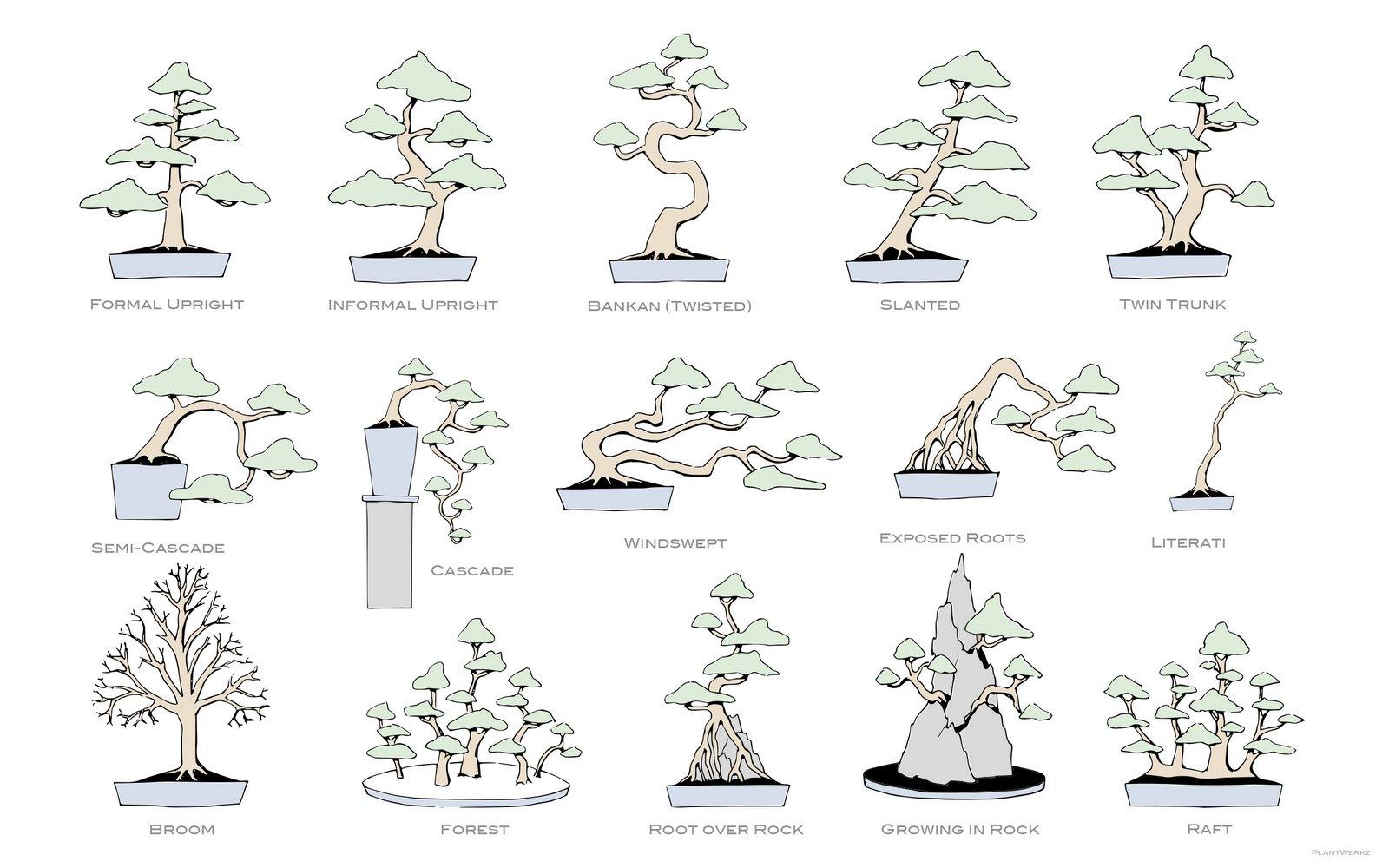 [PlantWerkz+Bonsai+Styles.jpg]