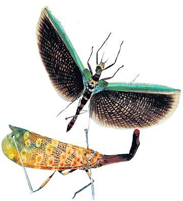 Dunia serangga di muzuim negara