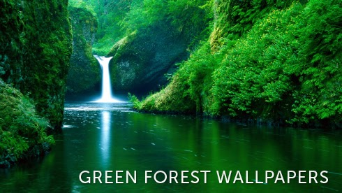 lush green forest wallpaper - photo #29