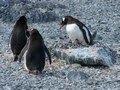 Mijn Antarctica Expeditie