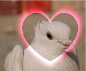 ~Kasih Abadi~