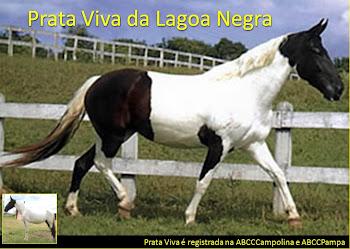 Prata Viva da Lagoa Negra