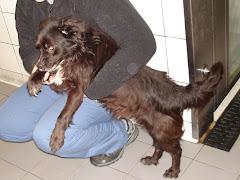 Cão Encontrado e Adoptado