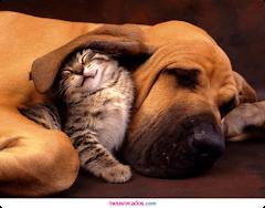 Pet-Sitting * Isabel Carvalho- Cuidados Domiciliários a Animais