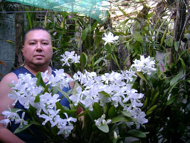 Orquidea Guarianthe skinneri var alba