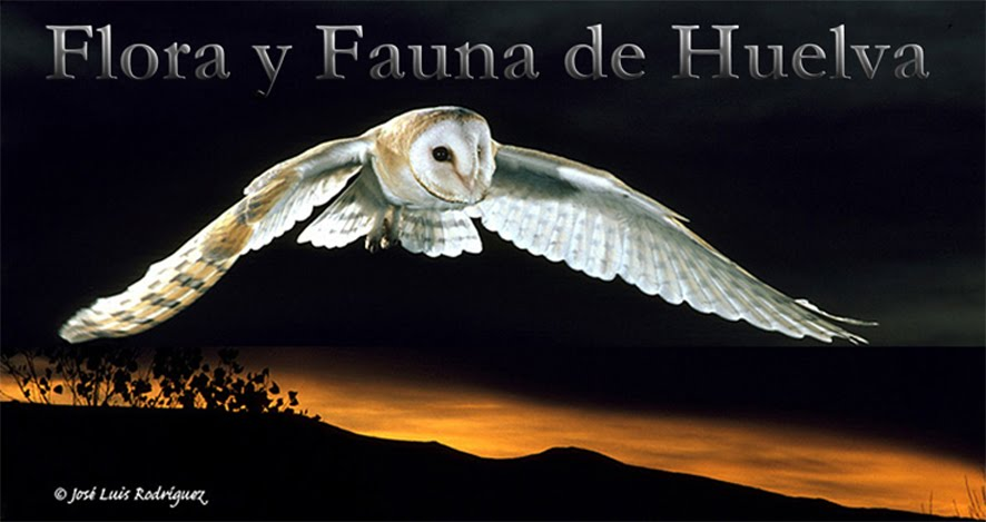 FLORA AND FAUNA OF HUELVA. ANDALUSIA